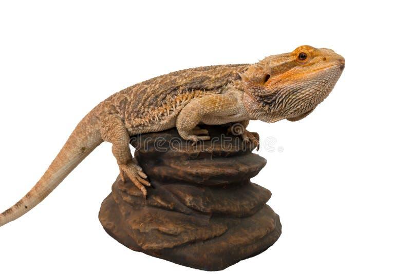 Dragão farpado escalado a uma rocha foto de stock royalty free