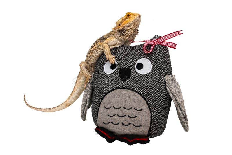 Dragão farpado que senta-se em um brinquedo da coruja foto de stock royalty free