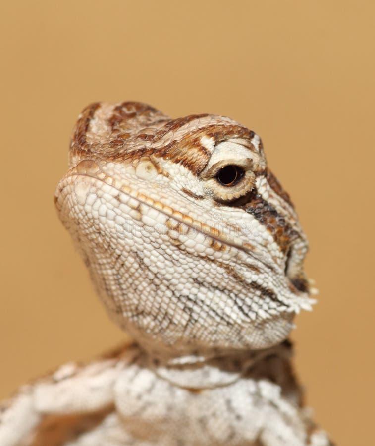 Dragón de Bbay foto de archivo libre de regalías