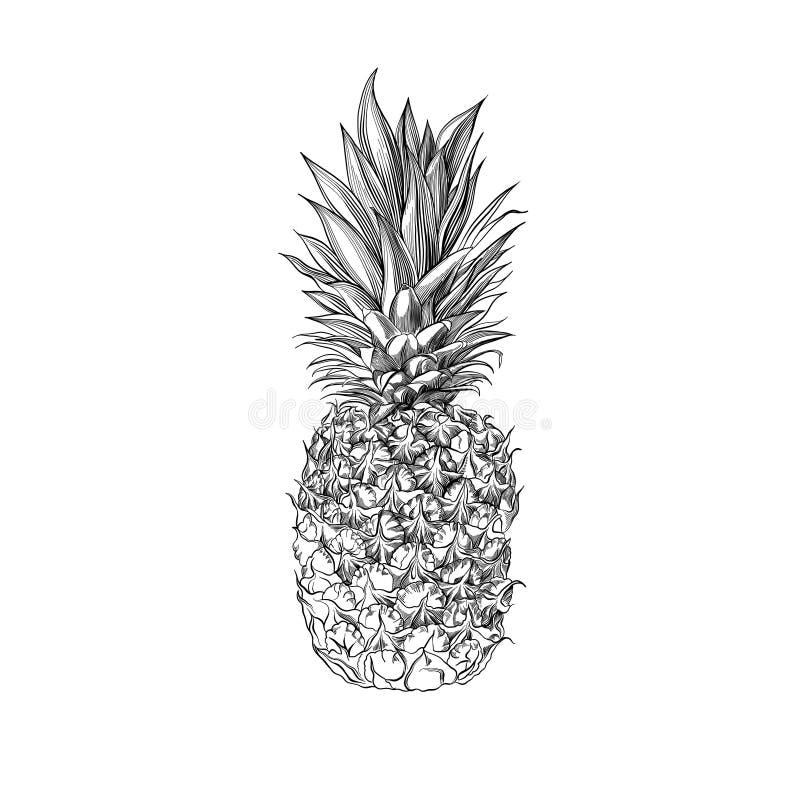 Dragen ananas för vektor hand Tropisk inristad stilillustration för sommar frukt vektor illustrationer
