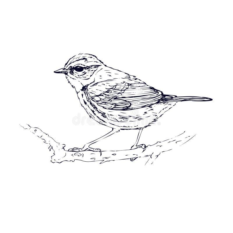 Dragen blåsångarehand skissa stock illustrationer