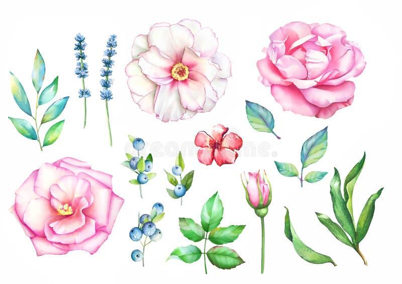 Dragen blom- samling för vattenfärg hand vektor illustrationer