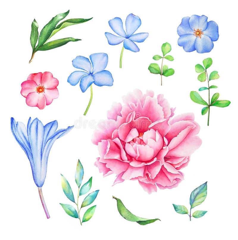 Dragen blom- samling för vattenfärg hand royaltyfri illustrationer