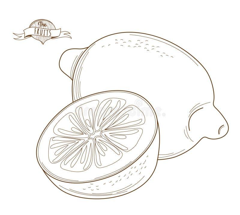 Dragen citron för vektorillustrationöversikt hand (plan stil, tunt l vektor illustrationer