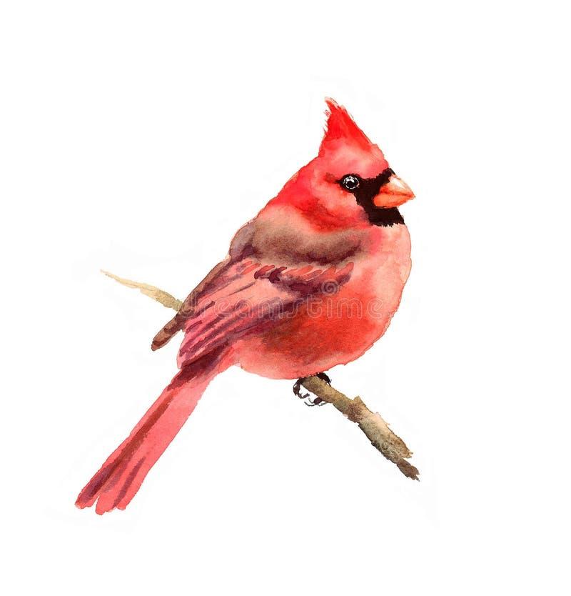 Dragen hand för kardinalBird Watercolor Winter illustration royaltyfri illustrationer