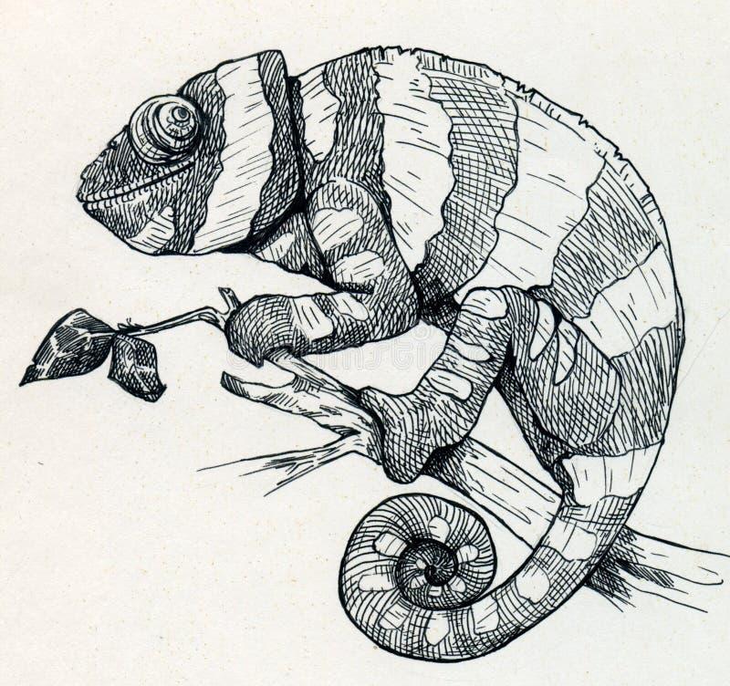 Dragen hand le kameleonten royaltyfri illustrationer