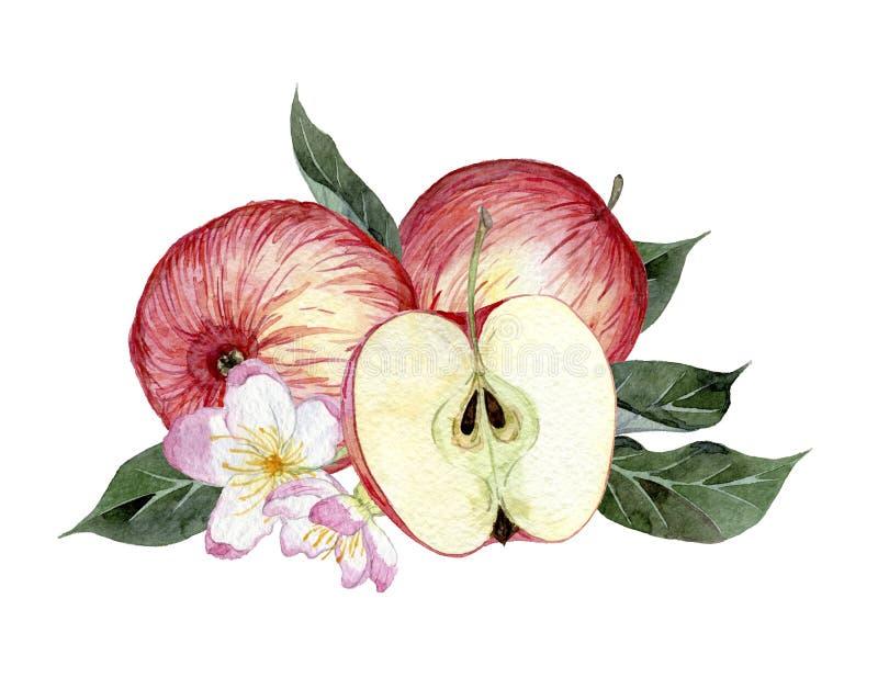 Dragen illustration för vattenfärg hand av äpplen, sidor och blommor royaltyfri illustrationer