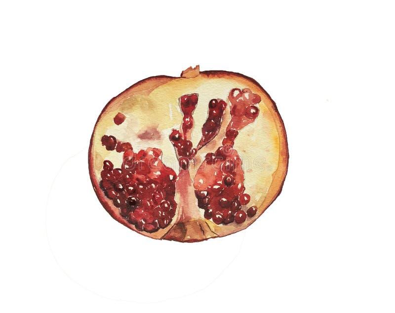 Dragen illustration för vattenfärg hand av granatäpplet Vattenfärgfrukt: halv granat royaltyfri illustrationer