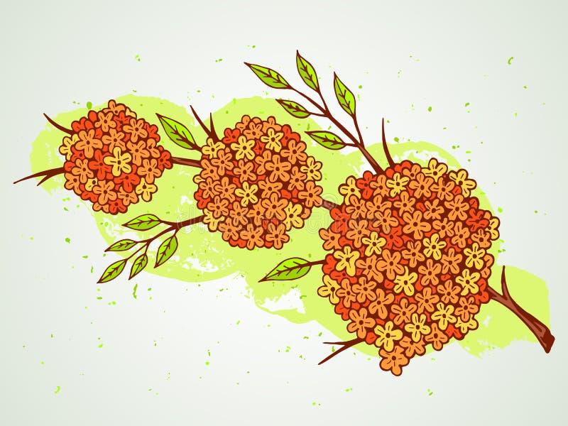 Dragen illustration för vektor hand med blommor på texturerad vattenfärgbakgrund vektor illustrationer