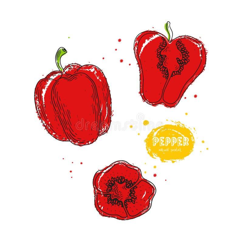 Dragen illustration för vektorpeppar hand i stilen av gravyr Detaljerad vegetarisk matteckning Lantgårdmarknadsprodukt royaltyfri illustrationer