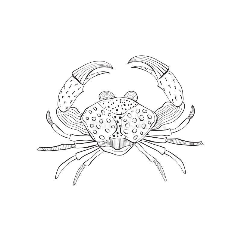 Dragen krabba för vektor hand stock illustrationer
