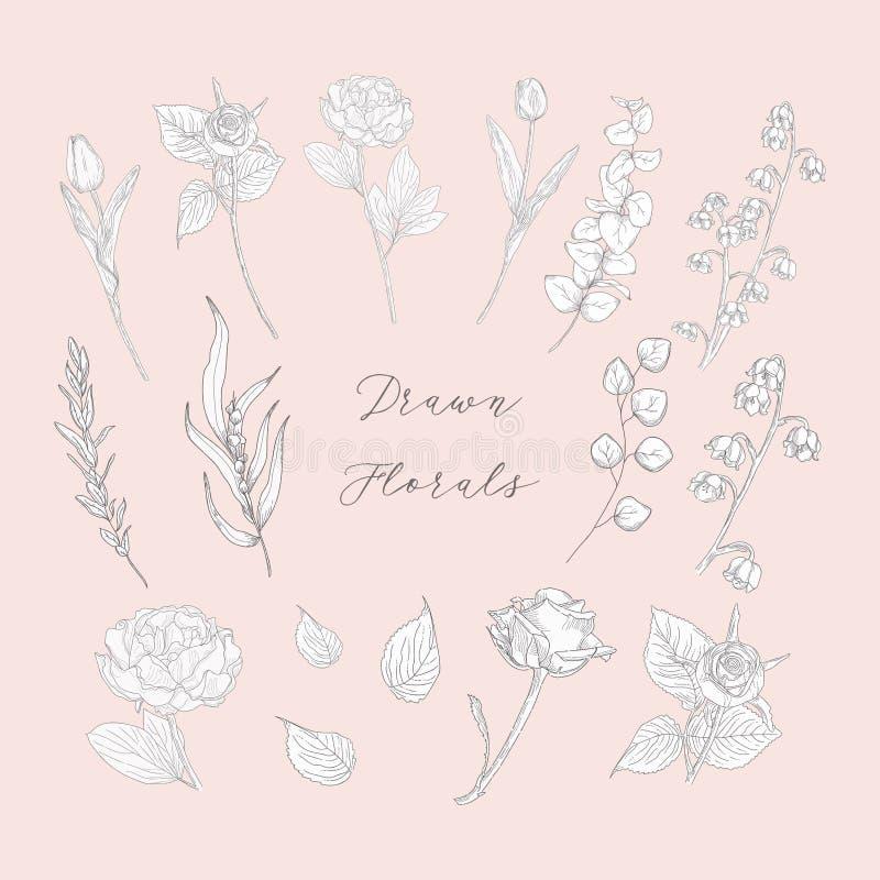 Dragit blom- för vektor hand, blommor, växter, örter vektor illustrationer