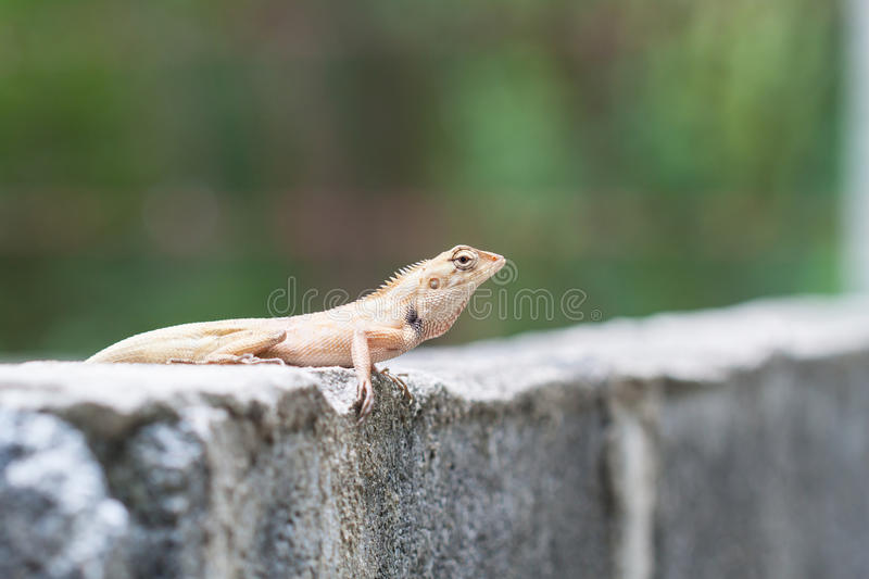 Download Drago fotografia stock. Immagine di wildlife, terrarium - 56877612
