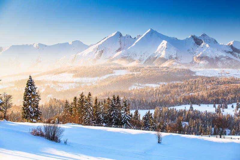 dragobrat krajobrazowa halna Ukraine zima  zdjęcia stock