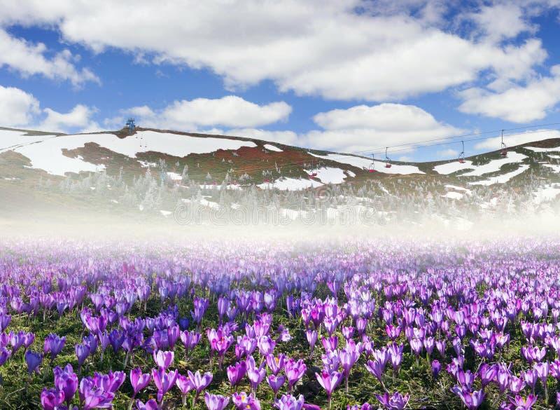 Dragobrat våren Carpathians royaltyfria foton