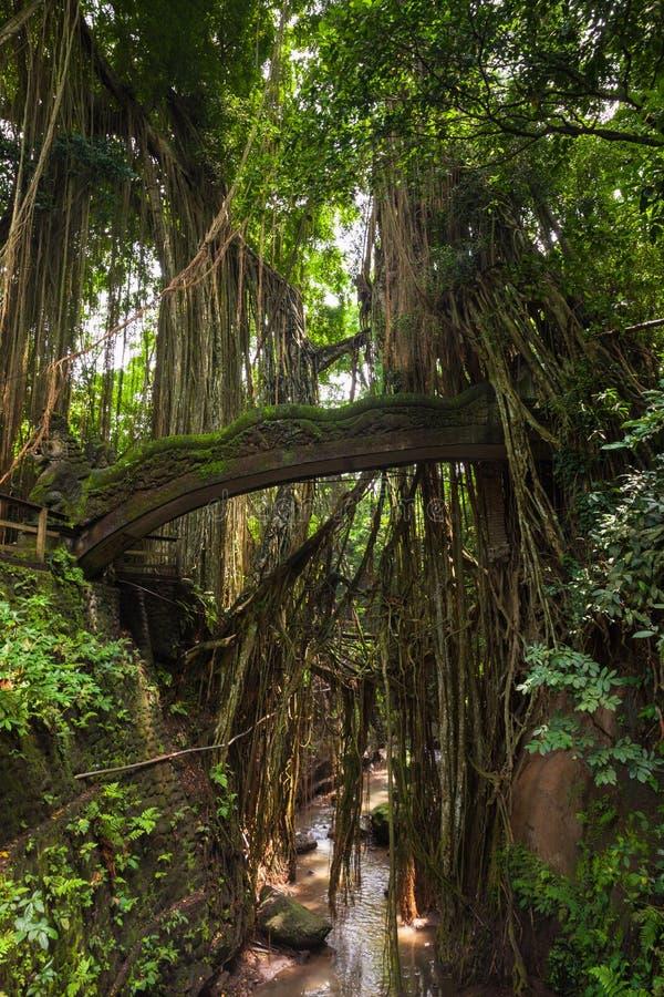 Dragon Bridge no macaco sagrado Forest Sanctuary, Ubud, Bali fotos de stock