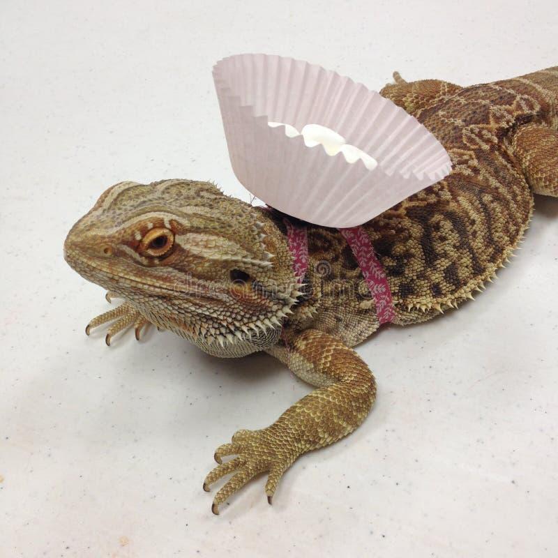 Dragon Carrying Marshmallows barbudo - frente fotografía de archivo