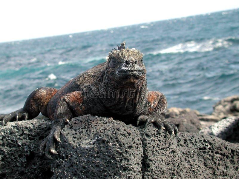Dragon De La Mer Photographie stock