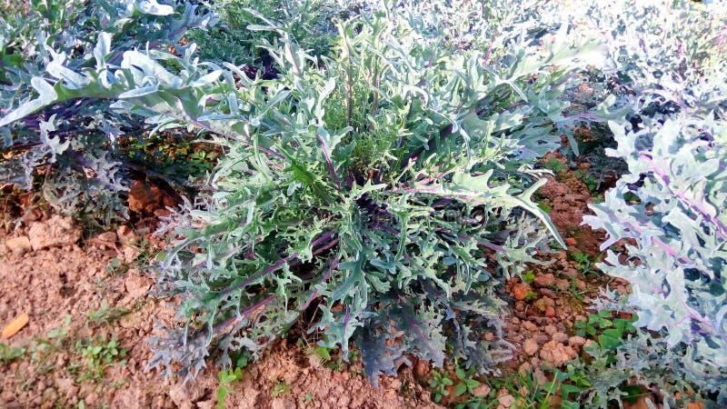 Dragon Flower foto de stock royalty free