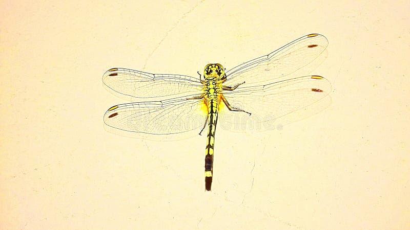 Dragon Fly images libres de droits