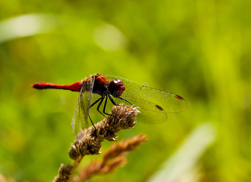 Download Dragon fly stock photo. Image of green, small, close - 20593218