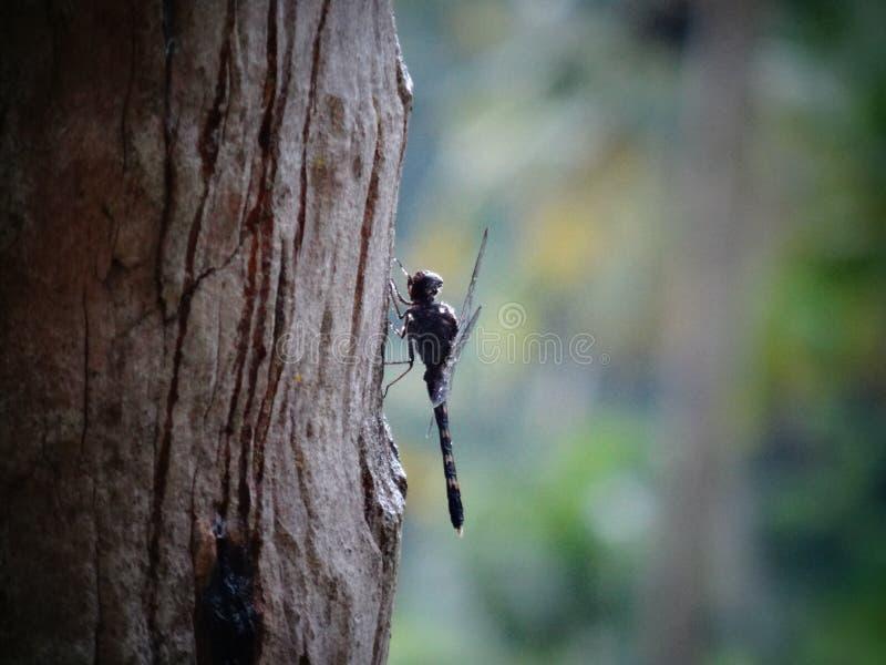 Dragon Fly stock foto's