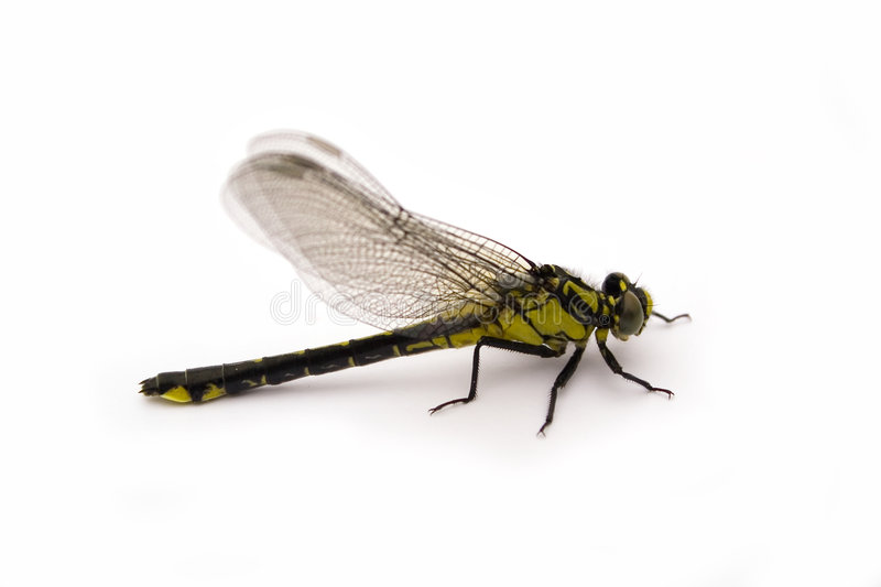 Dragon-fly royalty free stock images