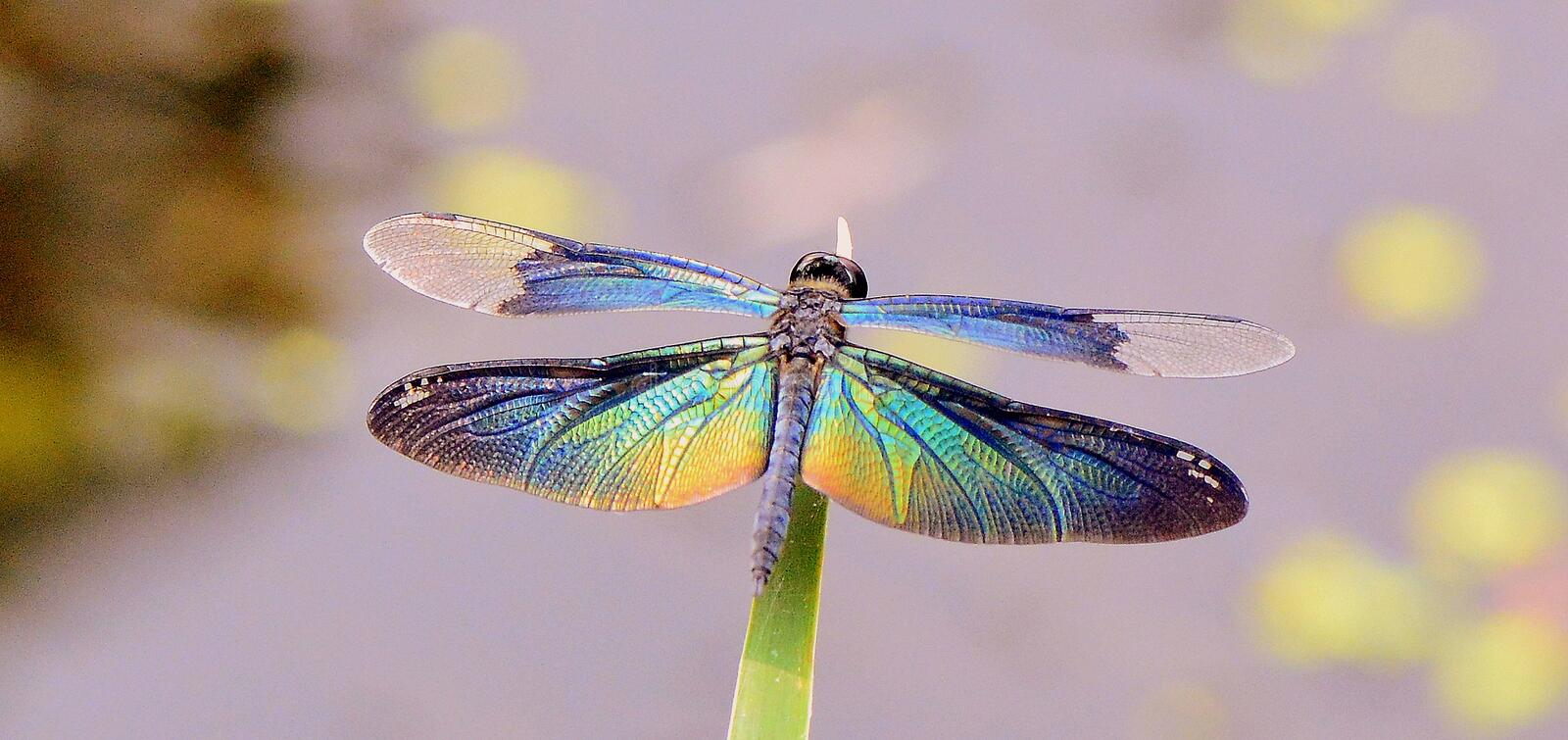 Download Dragon fly stock photo. Image of leaf, nature, close - 42434338