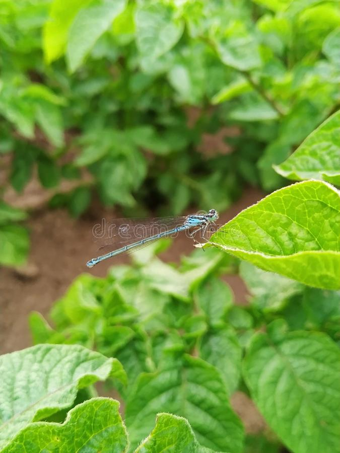Dragon Fly photo stock