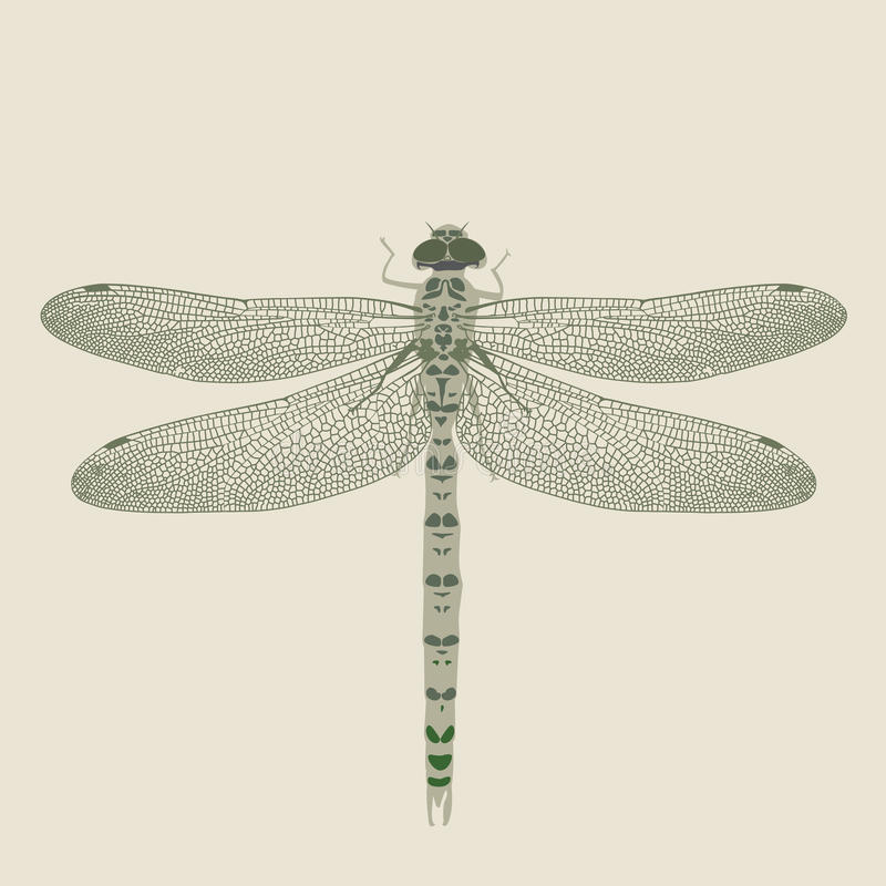 Download Dragon-fly On A Neutral Background Royalty Free Stock Photography - Image: 12474957