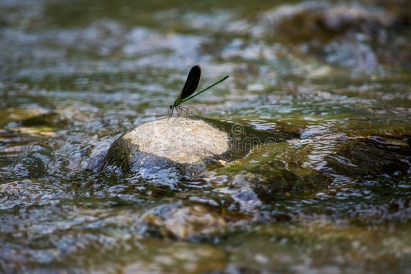 Dragon Fly sur la délivrance photographie stock libre de droits