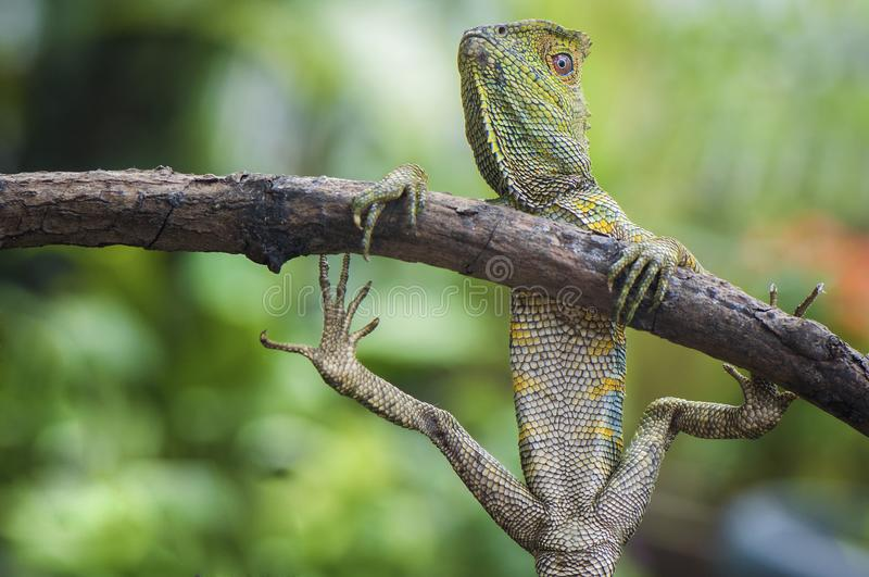 Dragon Forest Funny Action and Pose royalty free stock photo