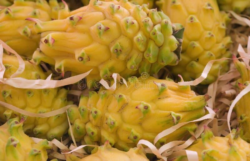 Download Dragon Fruit Royalty Free Stock Images - Image: 2309949