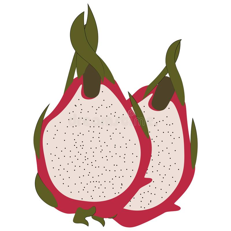 Dragon fruit close up in a slice stock illustration