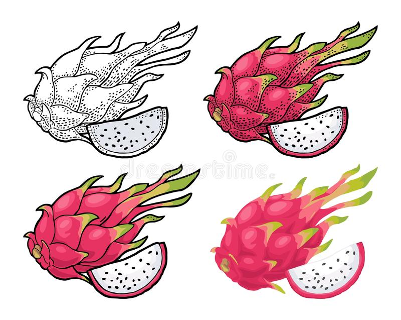 Dragon fruit whole and slice. Vector vintage engraving and flat color. Illustration for menu, poster. Isolated on white background royalty free illustration