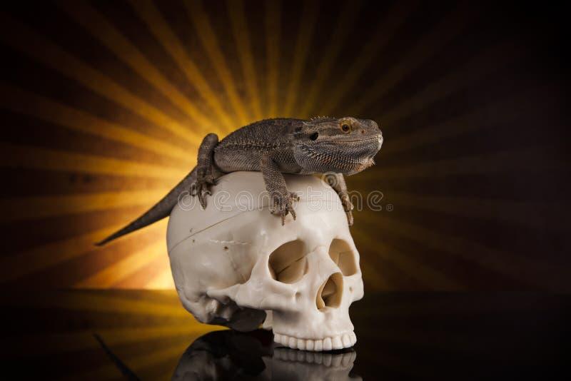 Dragon lizard royalty free stock photos