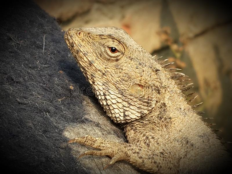 This is dragon nice click. This nice pic by my samsung s4 mobile phone nice top part of tree stock photography