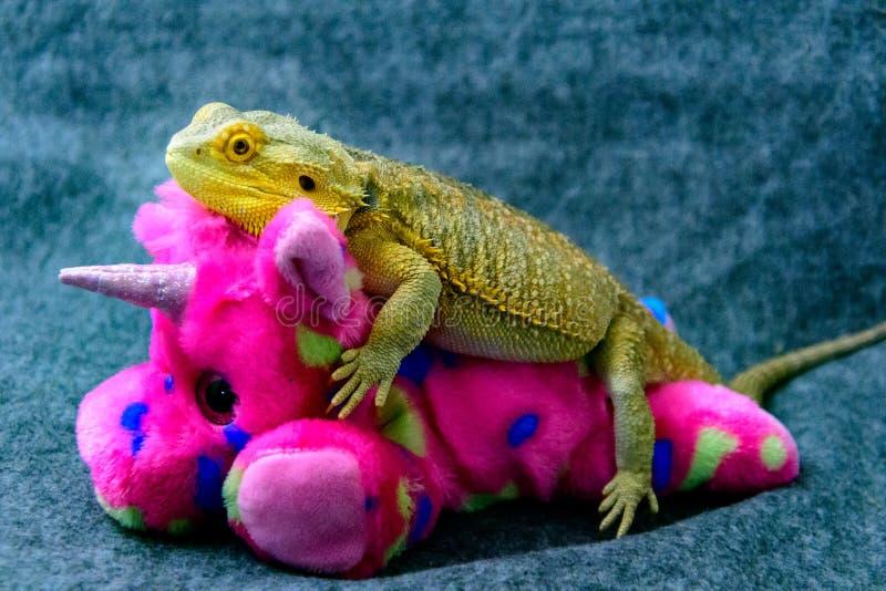 Dragon Pink Unicorn Ride barbudo imágenes de archivo libres de regalías