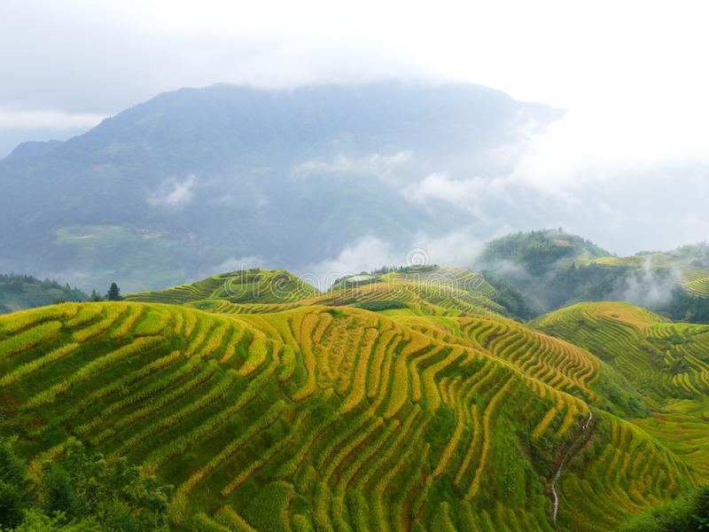 Dragon ridge rice fields stock photo