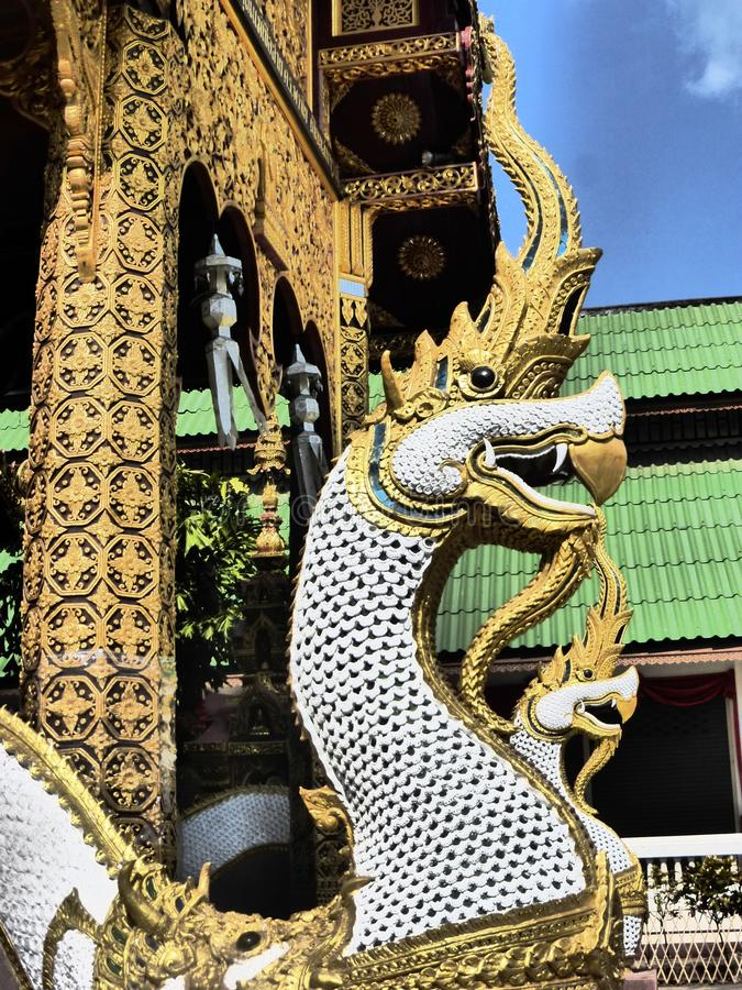 Dragoner in Chiang Mai/in Thailand stockfotografie