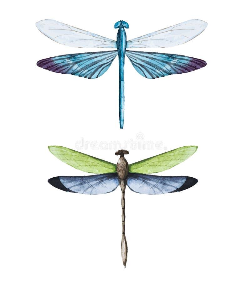 Dragonflies акварели бесплатная иллюстрация