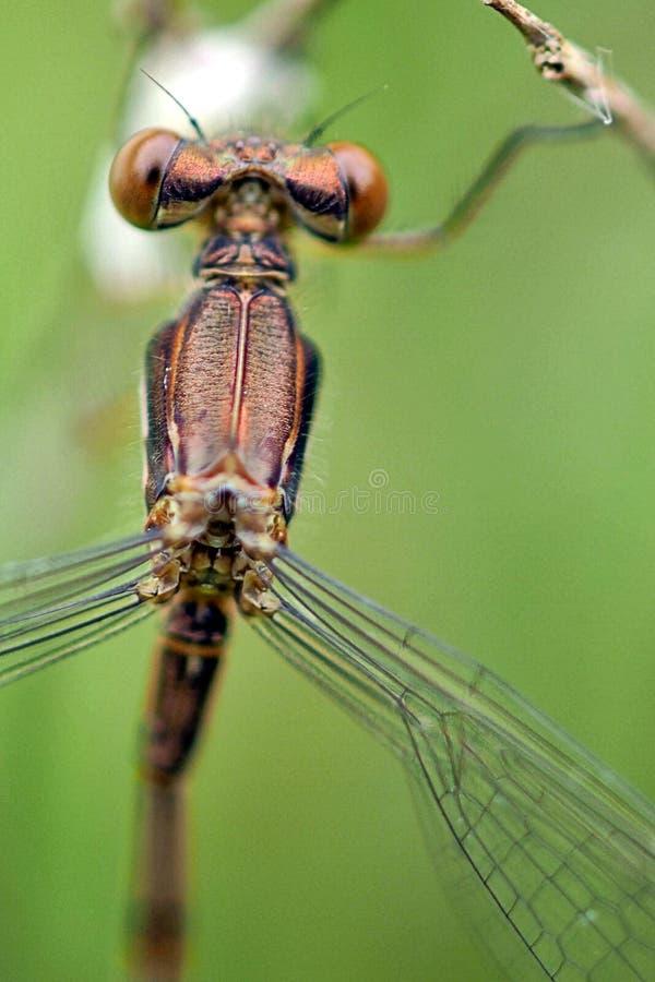 Dragonflies przechodzi ja obok fotografia royalty free