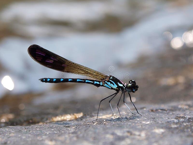 Dragonfly водопада стоковая фотография