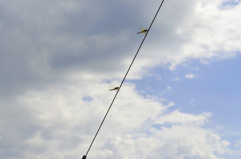 Dragonfly и небо стоковые фото