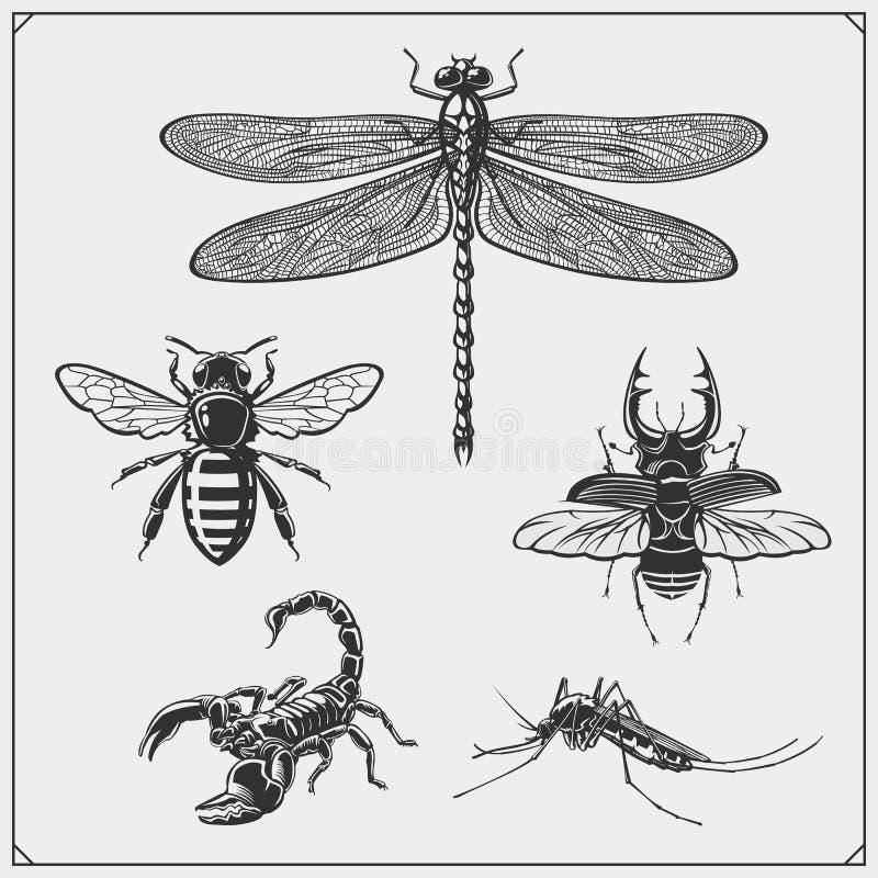 Dragonfly, пчела, скорпион и жук r r r иллюстрация штока
