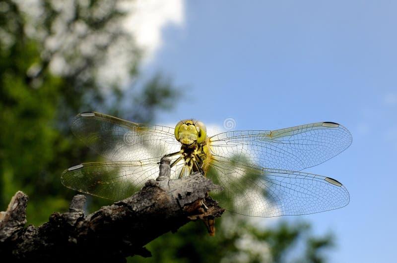 Download Dragonfly stock photo. Image of beautiful, green, macro - 10019974