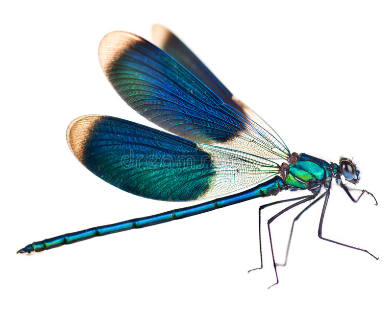 Download Dragonfly stock photo. Image of color, beauty, body, real - 14841354