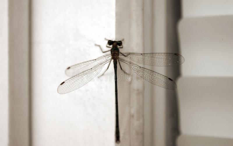Download Dragonfly stock photo. Image of structure, shades, insect - 191144