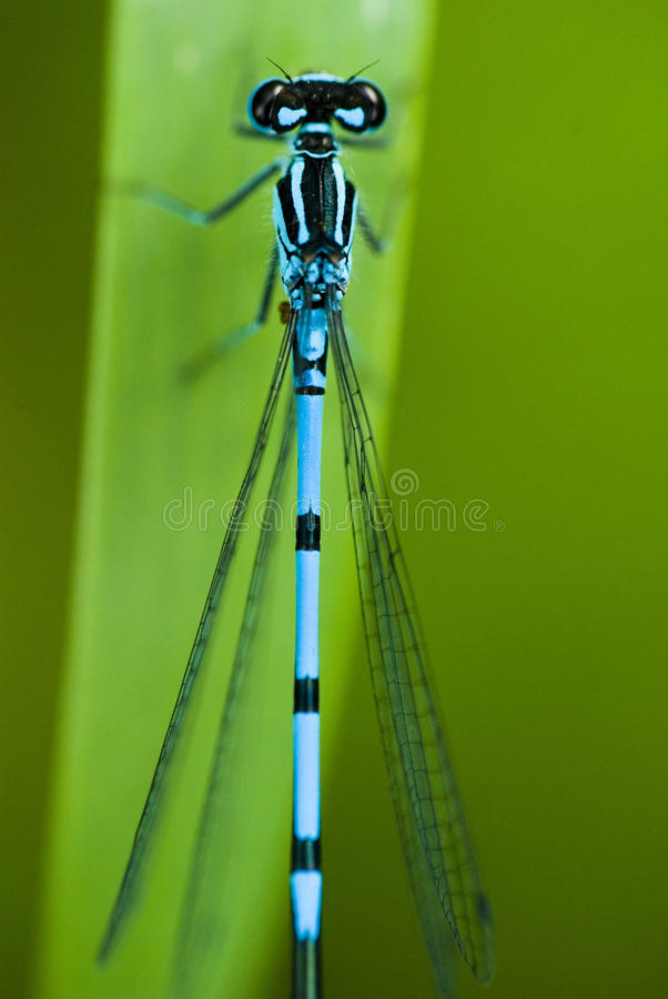 Download Dragonfly stock image. Image of closeup, green, plant - 20074323
