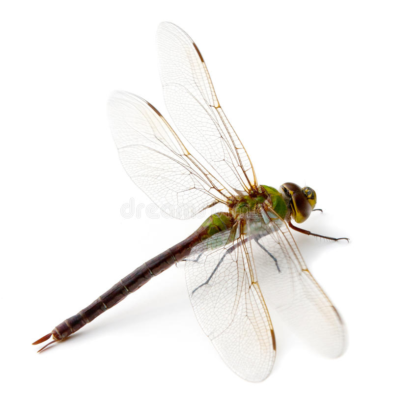 Free Dragonfly Stock Images - 21513044